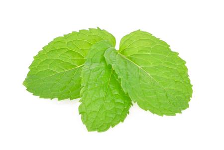 mint leaf on white background