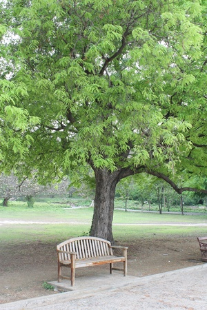 Wooden Brown chair under a tree