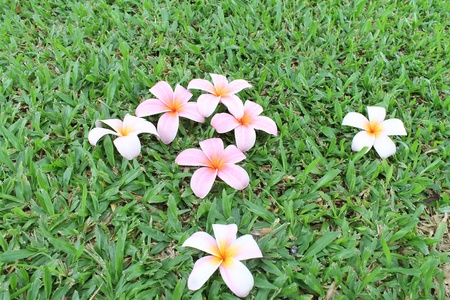 Lan Thom flowers on the grass Stock Photo - 12363056