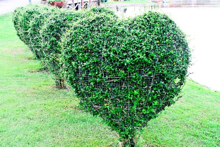 heart shaped tree photo