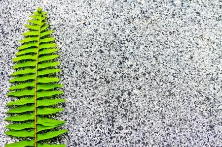 Fern leaf on the stone floor  Stock Photo