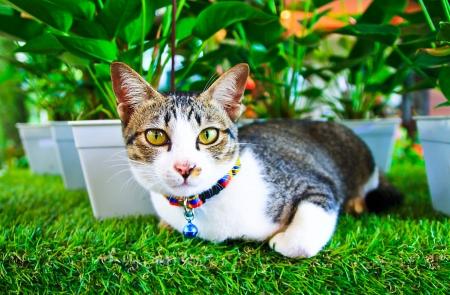 Cute cat lying on grass Stock Photo