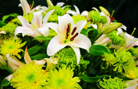 A bouquet of lily flowers
