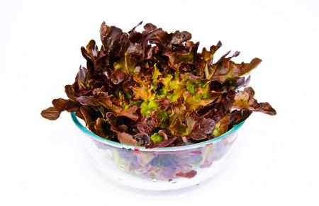 fresh green and red oak lettuce