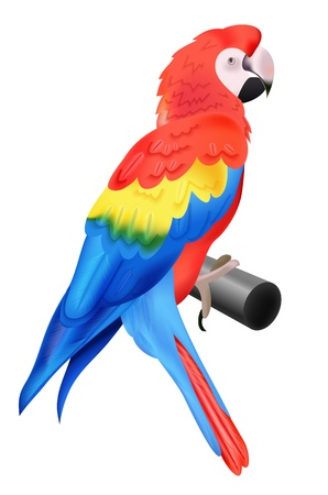 perch: Colorful parrot macaw isolated on white background  illustration for your bird wildlife design  Vivid bird sitting on perch