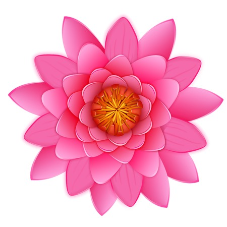 Beautiful pink lotus or waterlily flower isolated on white background. Vector illustration for your pretty design. Close up  blossoming bud in Japanese pond. Photo realistic image. Illustration