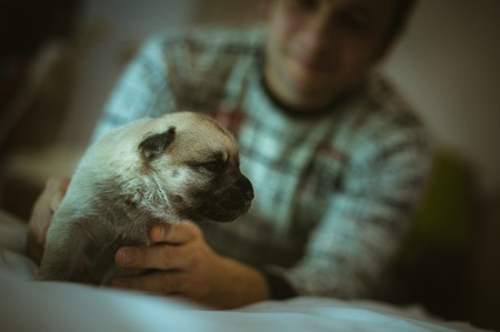 Image of cute little puppy in hands of young man closeup indoor. photo