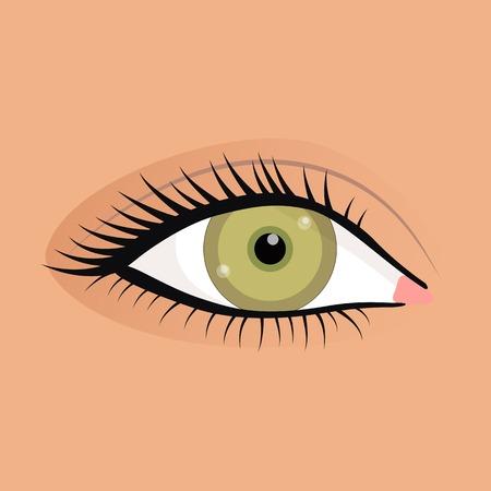 lash: Open female eyes image with beautifully fashion make up.