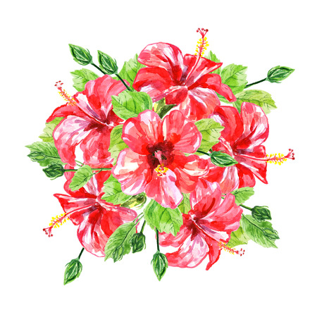 isolated flower: Bouquet from red watercolor Hibiscus flowers. Illustration isolated on white background. Colorful floral collection with leaves and flowers, hand drawn. Spring or summer design for invitation, wedding or greeting cards.