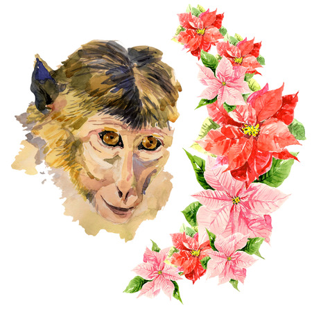 face close up: Monkey with an amazing red flowers on the background of the image. Hand drawn chinese zodiac symbol. New years holidays card material. Watercolor close up portrait of a chimpanzee face. Clip art.