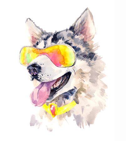 siberian husky: Watercolor siberian husky dog in cool sun glasses.