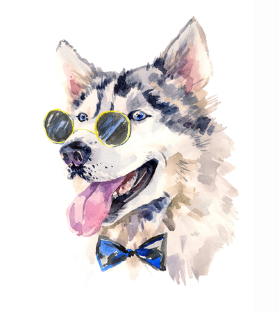 sun glasses: Handsome watercolor husky boy in bow-tie and dark sun glasses.