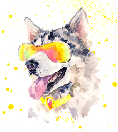 alaskan: Watercolor siberian husky dog in cool sun glasses.