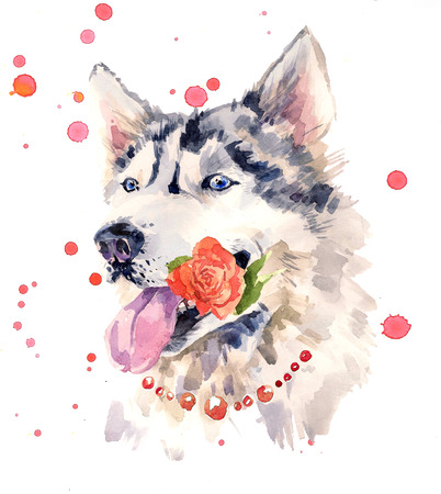 sheepdog: Fashionable coquettish siberian sheepdog with a rose in the mouth. Stock Photo