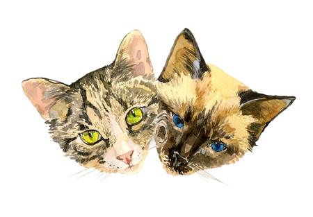 whisker characters: Close up fashionable portrait of two cute cats. Cat lovers sitting head by head. Original watercolor hand drawn illustration isolated on white background. For Valentines day posters, greeting cards