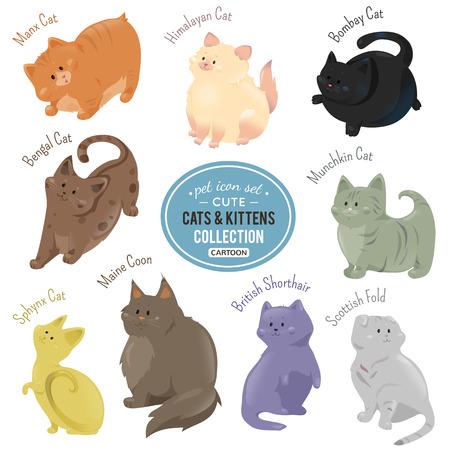 koty: Śliczne koty i kocięta przedstawiające inny kolor futra i rasy walking, rozmieszczenie i stojących na białym tle. Ilustracja