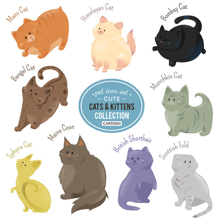 Cute cats and kittens depicting different fur color and breeds walking, siting and standing on white background. Illustration