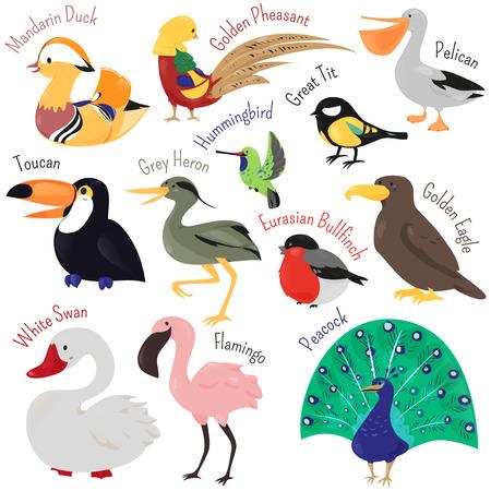 Conjunto de pájaro lindo de dibujos animados aislado en el fondo blanco. Ilustración del vector animal. Niño icono modelo de la diversión. Pato, tucán, cisne, garza, flamenco, pavo real, águila, camachuelo, el pelícano, el colibrí faisán Ilustración de vector