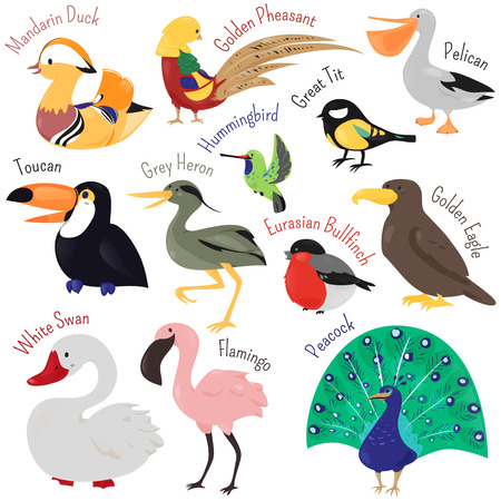 Set of cute cartoon bird isolated on white background. Vector animal illustration. Child fun pattern icon. Duck, toucan, swan, heron, flamingo, peacock, eagle, bullfinch, pelican, pheasant hummingbird