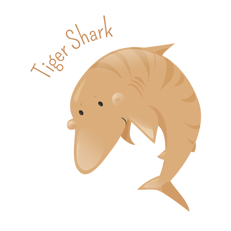 animal species: Tiger shark. Isolated cartoon character. Galeocerdo cuvier saltwater fish. Carnivore underwater dangerous predator. Marine hunter. Part of series of various australian animal species. Widlife concept