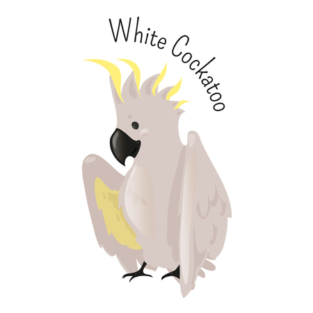 animal species: Exotic white cockatoo. Bird isolated. Cacatua alba. Medium-sized umbrella kind. Funny cartoon character. Part of series of various australian animal species. Wildlife concept. Home pet. Vector Illustration