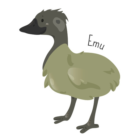 animal species: Emu isolated on white. Cartoon character. Australia endemic. Cute ostrich. Dromaius novaehollandiae. Second-largest living bird. Part of series of australian animal species. Wildlife concept. Vector Illustration