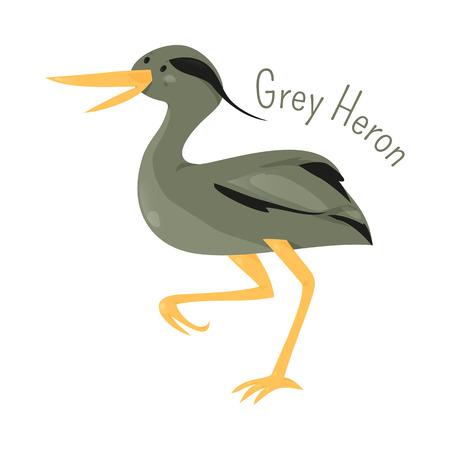 Grey heron isolated on white. Ardea cinerea. Long-legged predatory wading bird of the heron family, Ardeidae. Child fun pattern icon. Part of series of various bird species. Wildlife concept. Vector