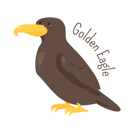 Golden eagle isolated on white. Large birds of prey of the family Accipitridae. Child fun pattern icon. Part of series of various bird species. Fauna. Wildlife concept. Cartoon style. Vector