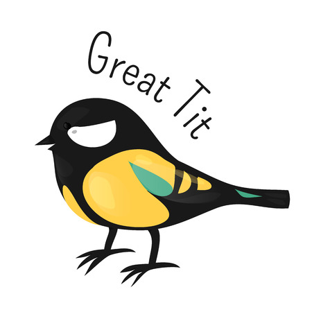 Great tit isolated on white. Tits, chickadees, and titmice constitute the Paridae, family of small passerine birds. Child fun pattern icon. Part of series of various species. Cartoon. Vector Illustration