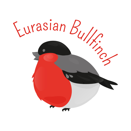 finch: Eurasian cartoon bullfinch isolated on white background. Small passerine bird in the finch family Fringillidae. Child fun pattern icon. Part of series of various species. Fauna. Ornithology. Vector