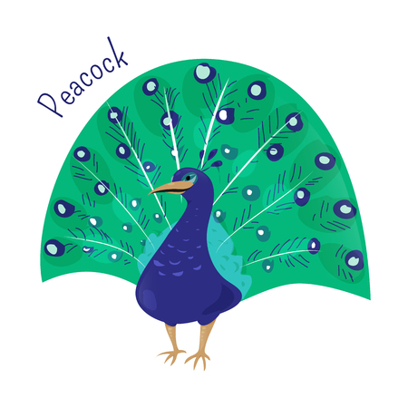 genera: Cartoon peacock isolated on white. Blue or Indian peafowl, Myanmar, Congo. Genera Pavo and Afropavo of the Phasianidae family. Child fun pattern icon. Part of series of various species. Vector