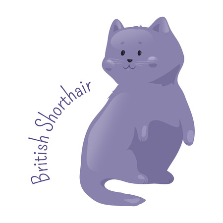 pedigreed: British blue shorthair cat isolated. Pedigreed domestic mamal with distinctively chunky body, dense coat and broad face. Part of series of cartoon kitten species. Child fun pattern icon. Vector Illustration