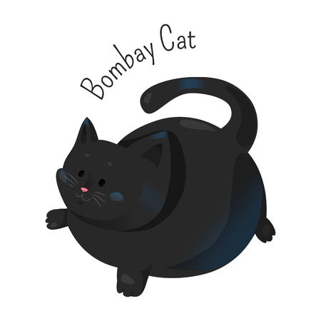 bombay: Bombay cat isolated. Burmese type, but with a sleek, tight black coat. Short haired breed. Furry, carnivorous mammal. Part of series of cartoon funny kitten species. Child fun pattern icon. Vector Illustration