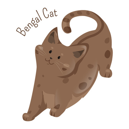 bengal: Bengal isolated on white. Breed developed to look like exotic jungle cats such as leopards, ocelots, margays. Furry mammal. Part of series of cartoon kitten species. Child fun pattern icon. Vector