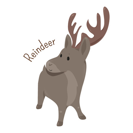 animal species: Reindeer isolated on white background. Rangifer tarandus. Caribou. Antlers are typically larger on males than females. Part of series of cartoon northern animal species. Child fun pattern icon. Vector
