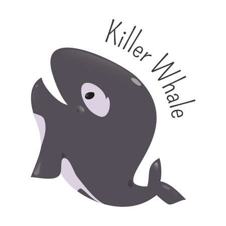 orcinus: Killer whale isolated. Orca. Orcinus. Large toothed animal. Oceanic dolphin family. Types transients, residents, offshore. Part of series of cartoon northern animal species. Child fun icon. Vector