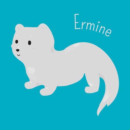 animal species: Ermine isolated on blue background. Stoat. Mustela erminea. Short-tailed weasel. Animal with pure white winter coat. Part of series of cartoon northern animal species. Child fun icon. Vector