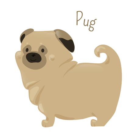 wrinkly: Pug isolated on white. Breed of dog with a wrinkly, short-muzzled face and curled tail. Fine, glossy coat fawn or black. Part of series of cartoon puppy species. Child fun pattern icon. Vector
