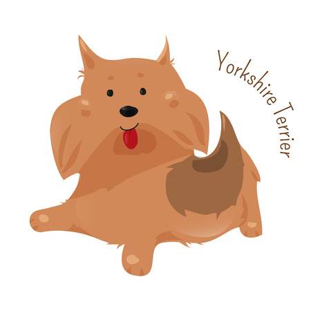 Yorkshire terrier isolated on white. It has a grey, black, and tan coat, and the breeds nickname is Yorkie. Domesticated canid. Part of series of cartoon puppy species. Child fun pattern icon. Vector