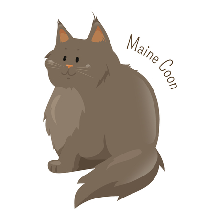 Maine Coon isolated on white background. Largest domesticated breed of cat, distinctive physical appearance and valuable hunting skills. Part of series of cartoon kitten species. Child fun icon Vector Illustration