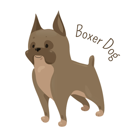 canid: Boxer dog isolated on white background. Coat is smooth and tight-fitting. Medium-sized, short-haired breed. Domesticated canid. Part of series of cartoon puppy species. Child fun pattern icon. Vector Illustration