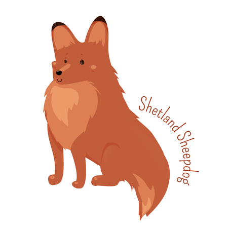 herding dog: Shetland Sheepdog isolated. Sheltie. Rough Collie. Breed of herding dog. Small, double coated, working dog, agile and sturdy. Part of series of cartoon puppy species. Child fun pattern icon. Vector