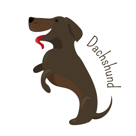Dachshund isolated. Short-legged, long-bodied, hound-type dog breed. Coat varieties smooth, longhaired, and wirehaired. Part of series of cartoon puppy species. Child fun pattern icon. Vector  イラスト・ベクター素材