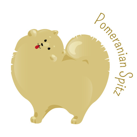 shaggy: Pomeranian spitz isolated. Pom Pom. Classed as toy dog breed for small size. Compact, has abundant coat with a highly plumed tail. Part of series of cartoon puppy species. Child fun icon. Vector