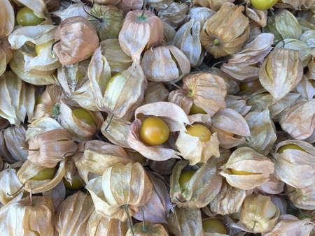 gooseberry: Cape gooseberry
