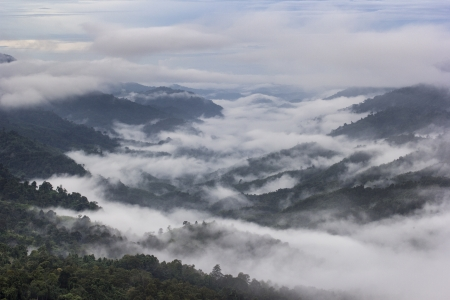 Morning Mist is at Tropical Mountain Range,This place is in the Kaeng Krachan national park,Thailand photo