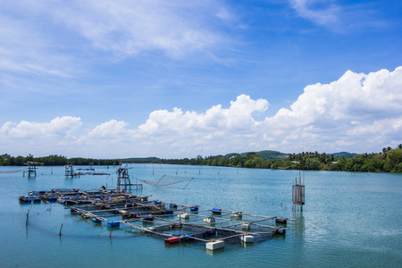 fish rearing: Cage aquaculture in Thailand