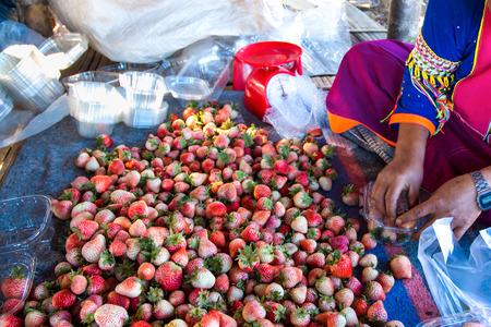 doi: lavoratore in azienda agricola della fragola a Doi Angkhang Archivio Fotografico