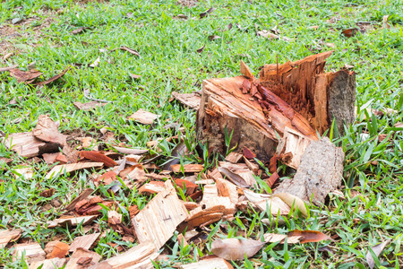 replanting: The tree was cut, leaving only stumps without replanting