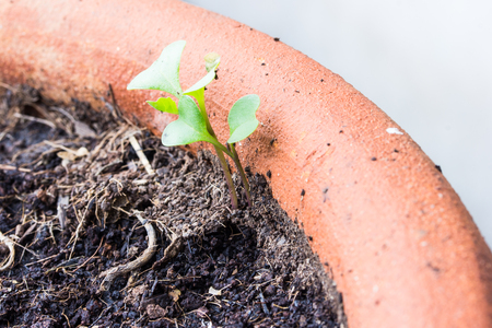 represent: small plant is growing represent to hope, start or life Stock Photo